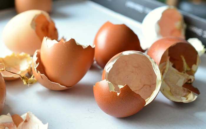 肌は卵でケア?ツヤツヤゆで卵肌を実現する、卵の美容活用術